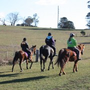 Horse riding group lesson