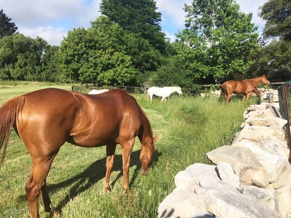 Horses with Dry Stone Wall at Ashton Park