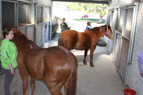School Holiday Horse Riding Stables