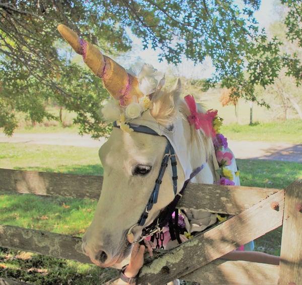 Unicorn at Ashton Park