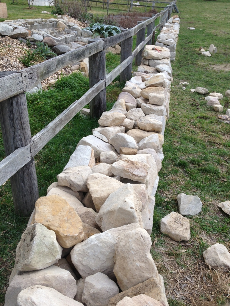 Cattle games - knock the stones off the Ashton Park dry stone wall